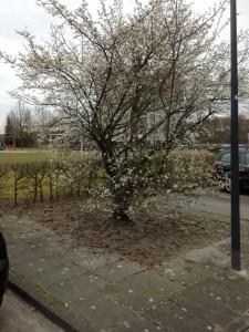 Sleedoorn Houtwolplantsoen 1 2016 03_720x960